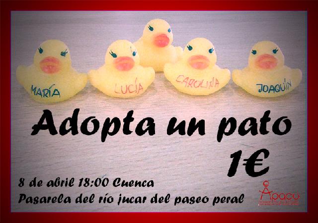 adopta_un_pato_cuenca_02
